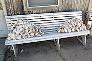 Conch shells piled on a bench outside a home along the Queen's Highway in Alice Town on the tiny Caribbean island of Bimini, Bahamas.