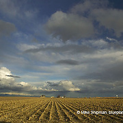 harvested corn field with stubble and cumulus clouds at sunset with farmhouse in the background