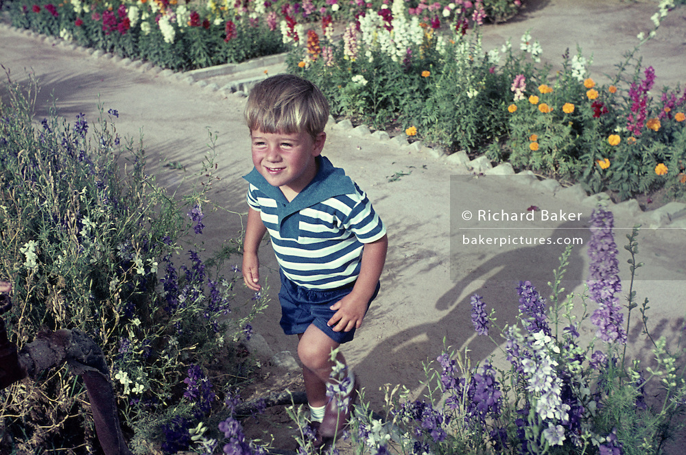 A young boy of about 5 years-old from the mid-sixties plays amongst lavender in his parents' property. He has the face of boyhood innocence as he traipses through the garden. It is the summer of 1967 and the colours are muted on this Kodachrome film slide which has a wonderful magenta colour cast in the mid-tones reminiscent of the classic days of early photography when shifts in color gave a faded look.