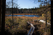PATTEN, ME - OCTOBER 9, 2013: A log footbridge leads to a pond on the land of a proposed national park in the Northern woods of Maine. The land for the park would be donated by the family of Roxanne Quimby and her son, Lucas St. Clair. Craig Dilger for The New York Times