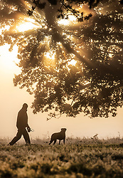 © Licensed to London News Pictures. 09/11/2019. London, UK. A man walks his dog in a cold and frosty Bushy Park in south west London. A cold spell is forecast in parts of the United Kingdom. Photo credit: Peter Macdiarmid/LNP