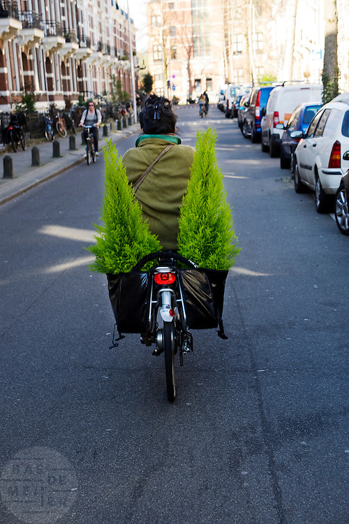 Een vrouw fietst met twee coniferen in haar fietstassen door Utrecht,<br /> <br /> A woman is cycling with two conifers in her bike bags.
