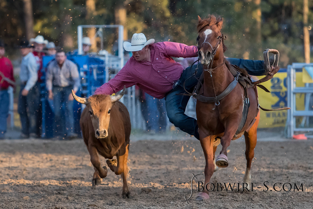 Steer wrestler Cutter DeHart makes his run during the second performance of the Elizabeth Stampede on Saturday, June 2, 2018.