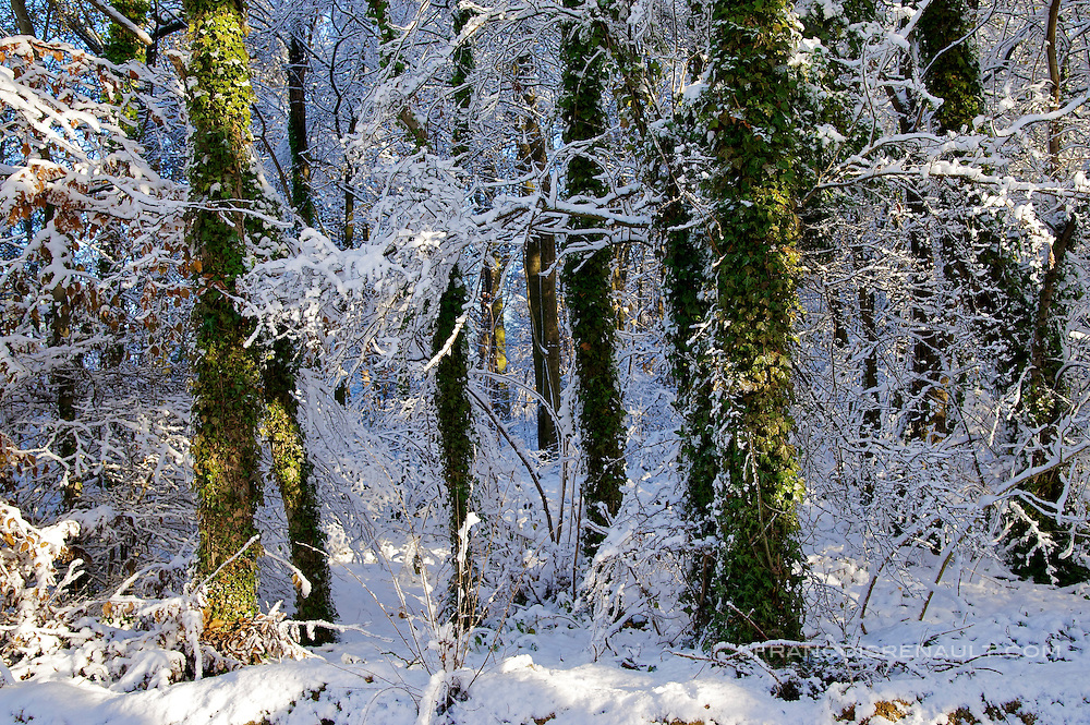L'Ile de France sous la neige, decembre 2010