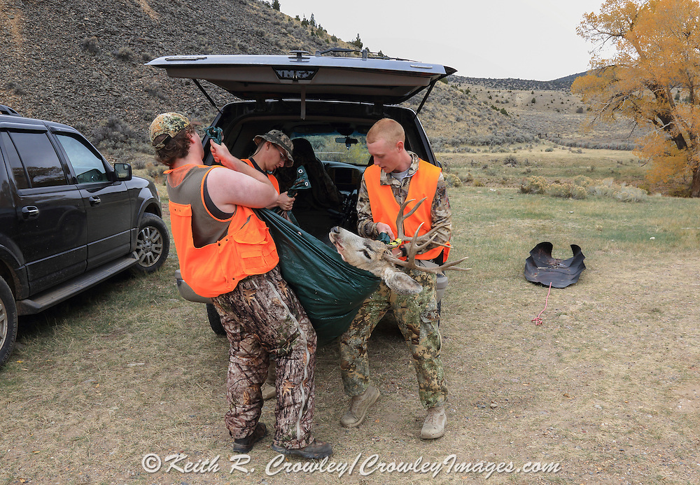 Successful backcountry hunters load a nice mule deer buck into their truck at a block management unit east of Dillon, Montana.