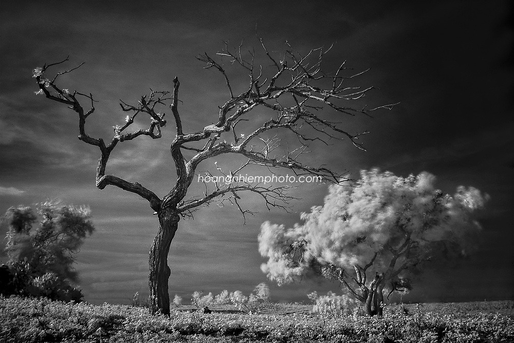 Vietnam Images-Fine art-nature-Infrared. hoàng thế nhiệm