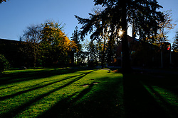 Sun peeks through trees in a late afternoon at PLU, Tuesday, Oct. 11, 2016. (Photo: John Froschauer/PLU)