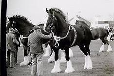 Shire Horses Show 1988