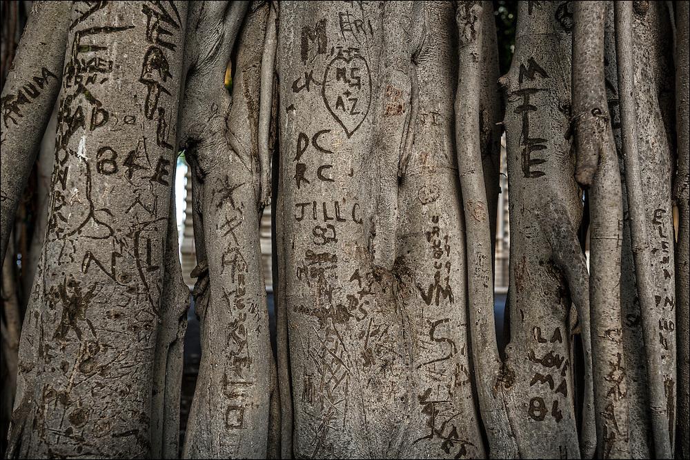Graffiti on banyan trees by Iolani Palace, Honolulu, HI ©PF Bentley
