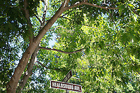 2013 May 13:  Street sign under open shade in Healdsburg, California.