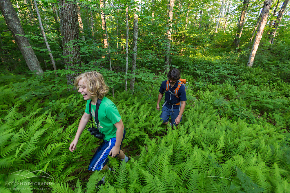 A man and his son explore the forest in Madbury, New Hampshire.