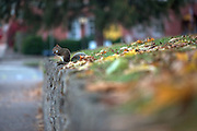 A squirrel eats an acorn on a ledge near Ohio University's College Green on November 12, 2016.