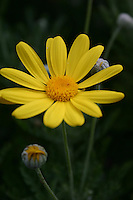 yellow flower<br />