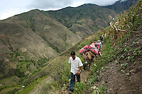 Bags of coca leaves are carried by mule in El Rosario, Nariño, in southwestern Colombia, on July 15, 2008. Nariño is a one of Colombia's most troubled departments; with wide spread coca cultivation and the presence of illegal armed groups vying for control of the coca business. (Photo/Scott Dalton)