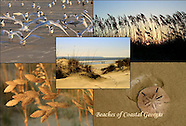 Coastal Georgia 4x6 Postcards: $6.00 per set of 12