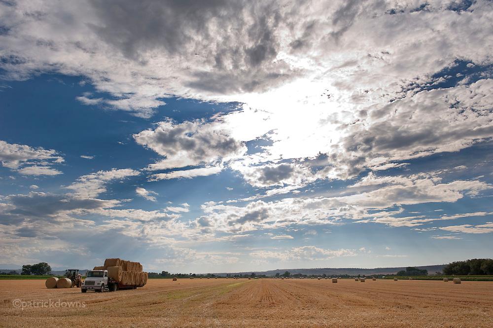Fresh-cut hay under the Big Sky in MT.
