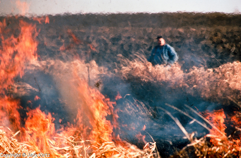 03 SEPTEMBER 1986, BATTLE LAKE, MINNESOTA, USA: A farmer burns dead grass out of a swamp on his land near Battle Lake, MN, September, 1986..PHOTO BY JACK KURTZ