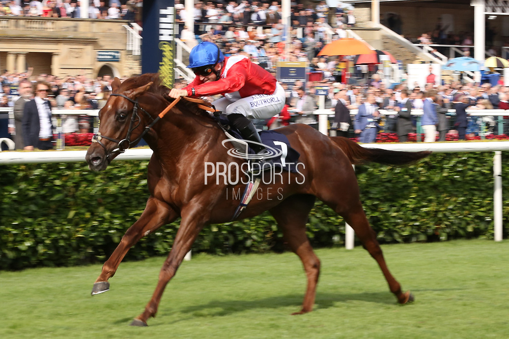 THREAT (1) ridden by Pat Dobbs and trained by Richard Hannon winning The Group 2 Pommery Champagne Stakes over 7f (£75,000)  during the fourth and final day of the St Leger Festival at Doncaster Racecourse, Doncaster, United Kingdom on 14 September 2019.