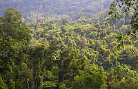 Tropical rainforest in Wooroonooran National Park, near Babinda, Queensland, Australia