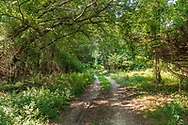 """Trail. Hallock State Park Preserve , Riverhead, NY, A""""  225-acre state park and nature preserve located in the towns of Riverhead and Southold in Suffolk County, New York"""""""