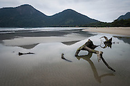 A piece of driftwood on the beach at Dois Rios on the island of Ilha Grande, Brazil. Photo by Andrew Tobin/Tobinators Ltd