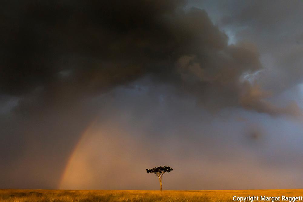 Look For The Rainbow
