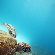 Turtle vision.