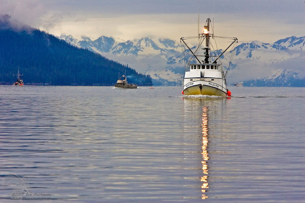 """The salmon tender """"Polar Star"""" cruises Prince William Sound's Port Wells, while buying salmon from smaller fishing vessels to deliver to the cannery in Cordova, Alaska."""