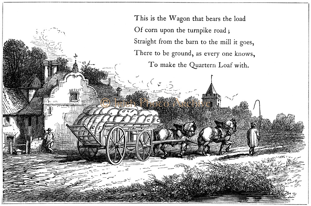 Wagon loaded with sacks of corn on the road to the flour mill.  Carter walks in front of his team of two carthorses with his whip held aloft.  Illustration from children's book, London 1860. Wood engraving.