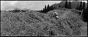 Traditional alpine farming and gathering in Switzerland, Alpine Landwirtschaft in der Schweiz, agriculture de montagne en Suisse. © Romano P. Riedo | FOTOPUNKT.CH