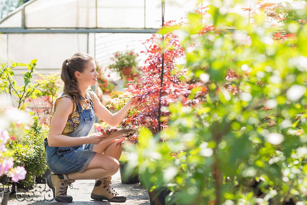 Full-length of female supervisor examining plants outside greenhouse