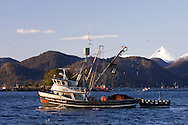 A commercial fishing seiner, F/V Nicholas Michael looks for fish during the Sitka Sound herring sac roe fishery in Alaska.