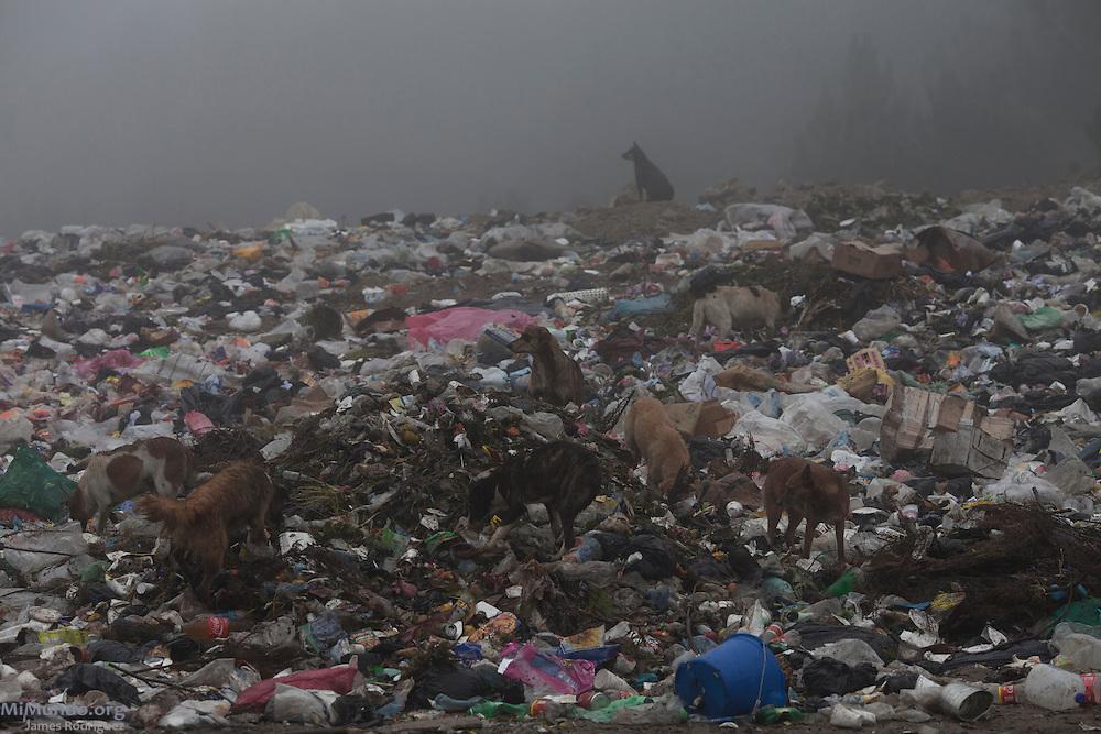 Dogs rummage a trash dump. San Rafael La Independencia, Huehuetenango, Guatemala. November 1, 2012.