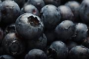 USA, Oregon, Keizer, blueberries.