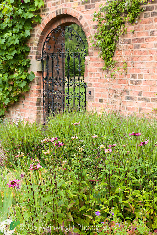 Echinaceas bring colour to a border at Cogshall Grange, Cheshire. The garden was designed by Tom Stuart-Smith