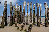 France Britany. Saint Malo the beach at low tide , Tree truncks protect the fortified city walls /  la plage de Saint Malo a maree basse