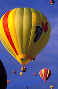 Hot air balloons rising in dawn light at the International Balloon Fiesta, Albuquerque, New Mexico