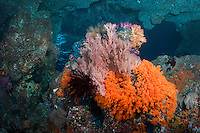 Vibrant Soft Corals and Sea Fans under a natural arch<br /> <br /> Shot in Raja Ampat Marine Protected Area West Papua Province, Indonesia