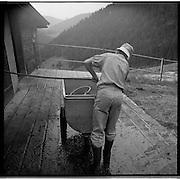 Alpages en Gruyère: Sur l'alpage des Groins dans la Vallée du Motélon près de Charmey Michel Remy produit du Gruyère d'alpage AOC. 45 vaches et 28 jeunes bovins y passent l'été durant 140 jours en compagnie de 25 porcs.et 2 chèvres. © Romano P. Riedo