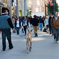 Fifth Avenue in October