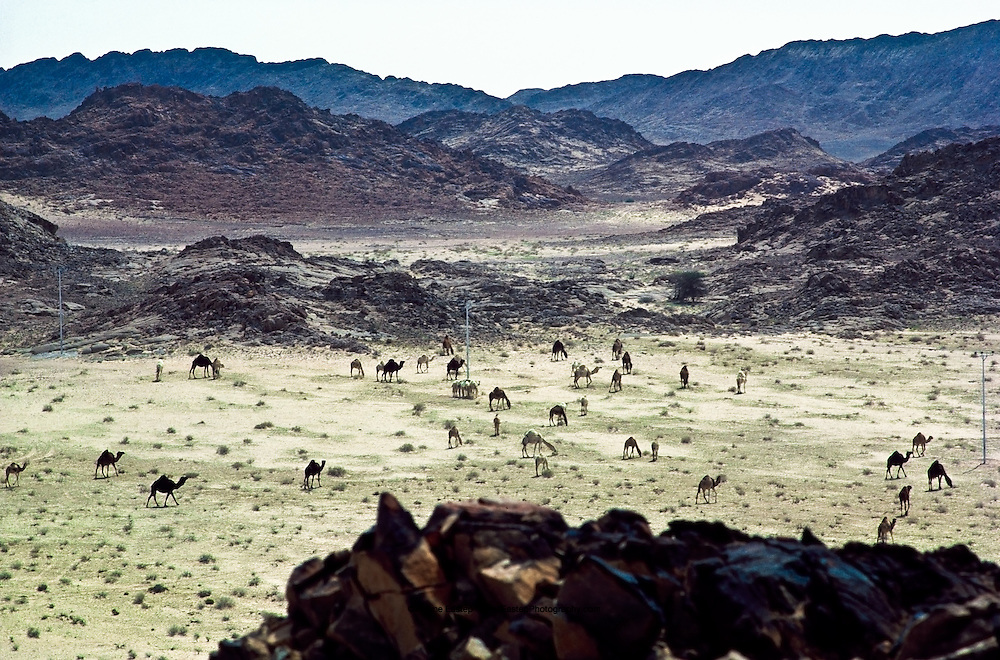 Dawadimi, a rich archeological tool site from the stone age, still frequented by Bedouin tribes. Central Arabia