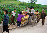 People collecting corn on a cart in  Kaesong, North Korea.