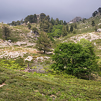 "Under the grey sky, lighting colors were cast all around us, about 1 hour's walk to the ""Refuge de Prati""."