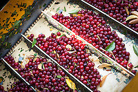 Cherry Bay Orchards Harvest on August 8, 2015