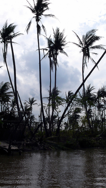 Trees destroyed by Cyclone Nargis in the Irrawaddy Delta.