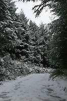 Snow in Wicklow forest, Ireland