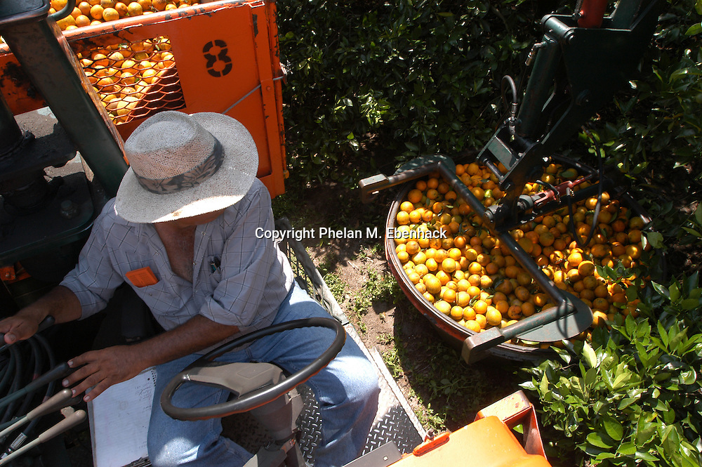 A worker operates a truck to lift containers full of oranges at a grove in Lake Wales, Florida.
