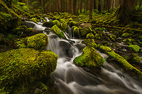 Small cascade spilling out of the lush Sol Duc Rainforest, Olympic National Park, Washington