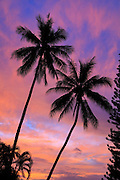 Twin coconut palm tree, sunset, Kaneohe Bay, Oahu, Hawaii
