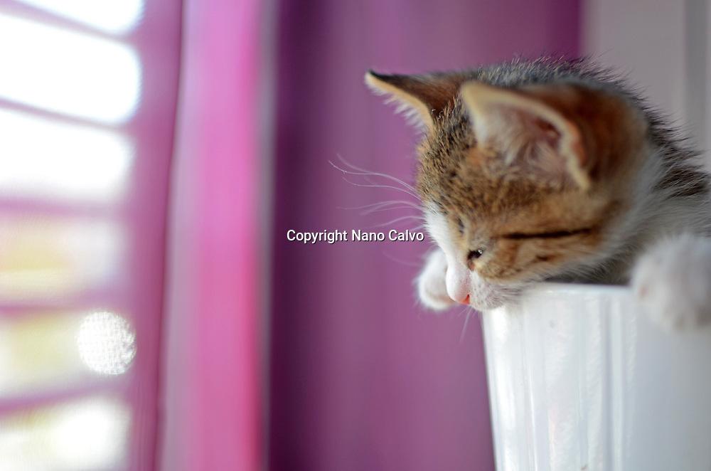 1/2 Months old kitten inside a pottery bowl